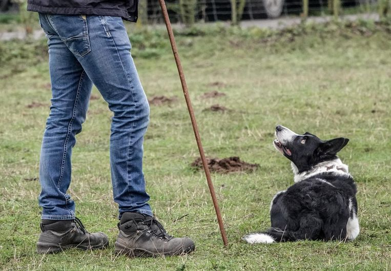 De hond kijkt aandachtig naar zijn baasje.