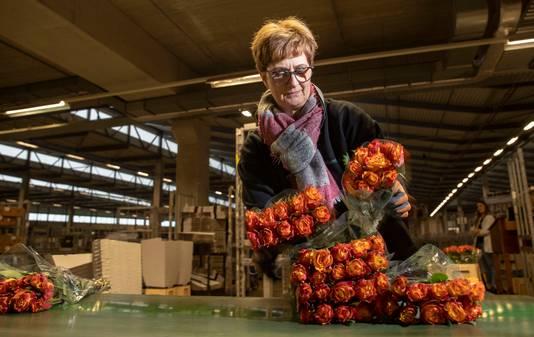 Medewerkers van Plantion maken Afrikaanse rozen klaar voor Valentijnsdag.