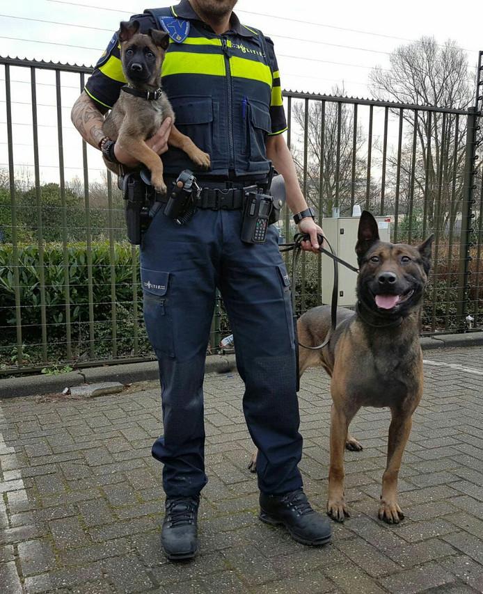 Politiepuppy Bumper Dagje Met Zijn Grote Vader Op Pad
