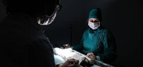 Nieuw pand Slingeland Dierenartsen beter voor dieren én werknemers: 'We leren van elkaar'