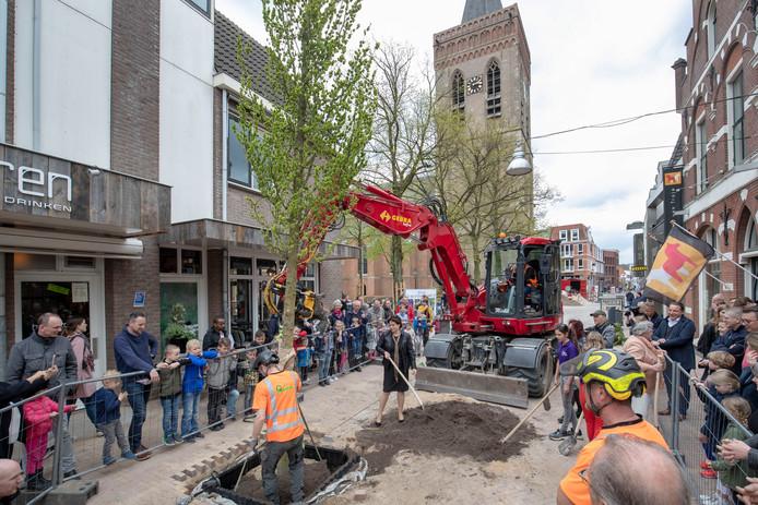 De eerste iep in de Grotestraat wordt geplant.