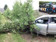 Leerling rijschool in shock: auto botst, verliest wiel en haalt appelboompjes neer in Zoelense fruitgaard