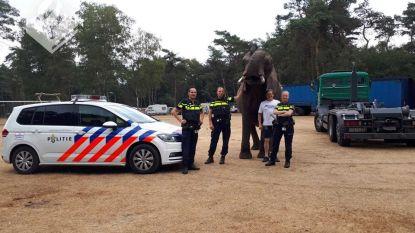 Nederlands gezin krijgt onverwachts bezoek van ontsnapte olifant