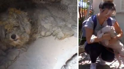 Deze hond verstopte zich onder een barbecue en overleefde de Griekse bosbranden