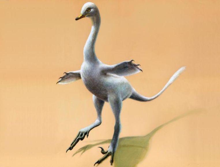 Zo zou de halszkaraptor eruit hebben gezien.