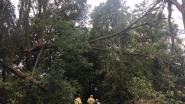 Wandelpad afgesloten door afgeknakte boom