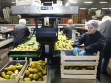 240 medewerkers fruitbedrijven in Rivierenland preventief getest na corona-uitbraak