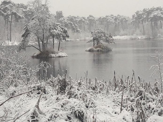 Oisterwijkse bossen veranderen in Winter Wonderland!