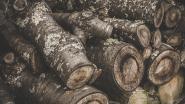 Koop je brandhout op het stadhuis