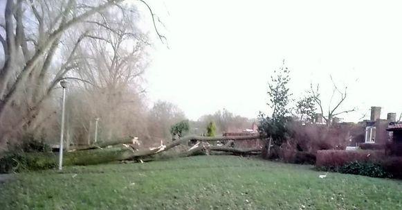 Er viel een populier op het Markebekepad. Omdat de boom groot is, is er ook schade in twee achtertuinen van woningen