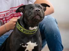 Weerloze hond Tommy werd 'onnodig heftig mishandeld door agenten'