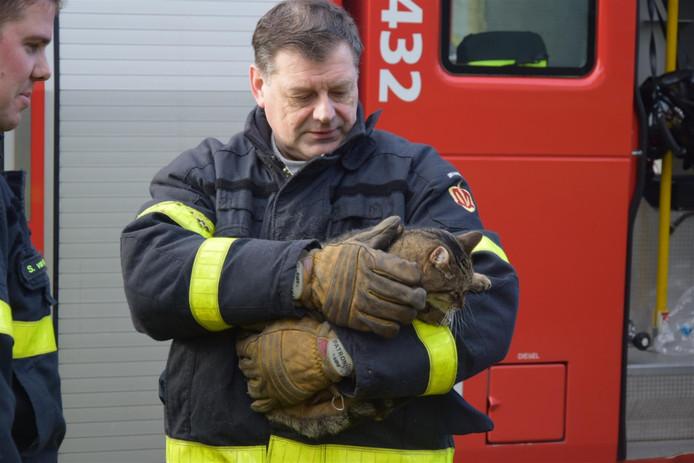 De brandweer redde de kat van zolder.