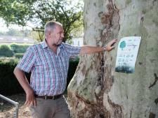 Deze boom levert zuurstof en zuivert de lucht: 'Een boom is meer waard'