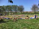 In twee cirkels liggen bezoekers van festival De Oversteek in de wei tijdens de bloemenregen in de tuin van Hof van Holland, ter ere van het 10-jarig bestaan van het festival.