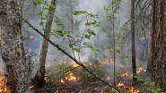 Nog steeds zware bosbranden in Siberië, al 13,4 miljoen hectare woud vernield