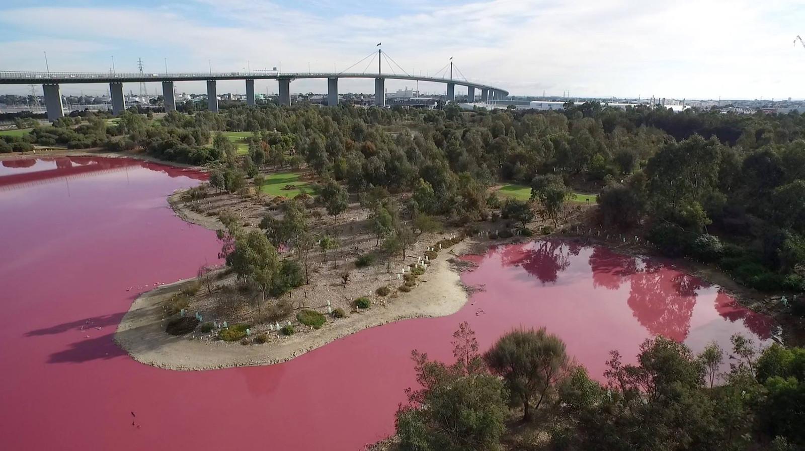 Een Australisch meer is roze gekleurd door natuurlijke redenen.