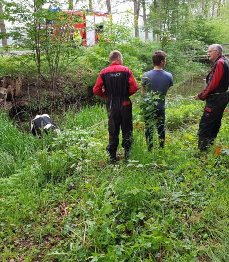 Op hol geslagen koe belandt in gracht Kasteel Slangenburg