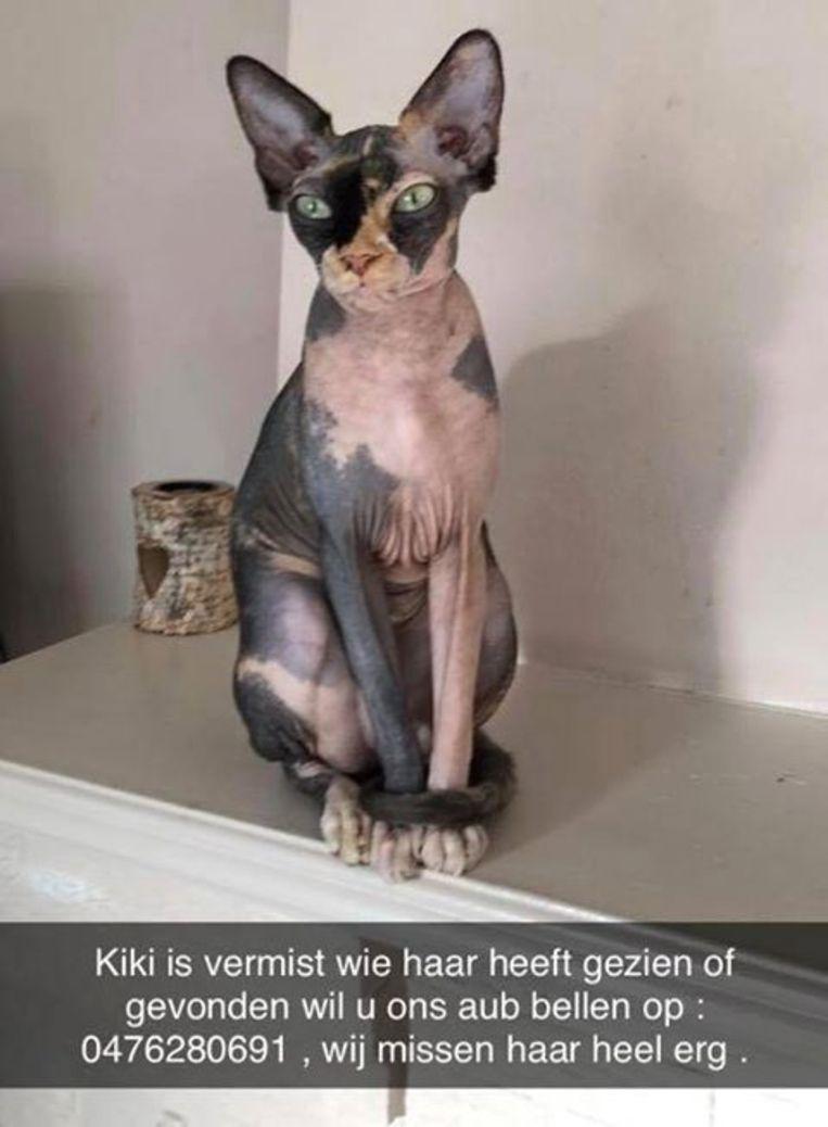 De vermiste kattin Kiki.