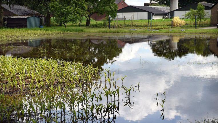 Een akker in het Brabantse Beugen is na hevige regen ondergelopen. Beeld Marcel van den Bergh/de Volkskrant