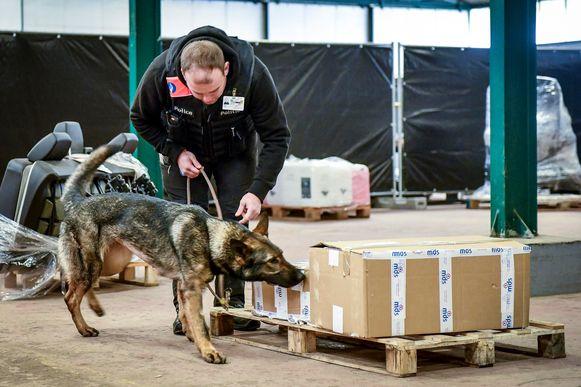 Een Duitse herder wordt getraind om explosieven te vinden.