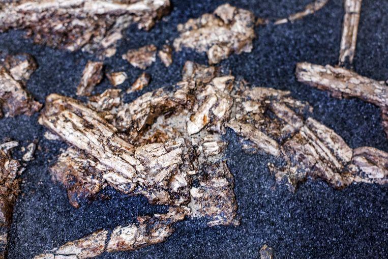 Maarssen- Close Up van Neolitisch Familegraf bij Archeocare in Maarssen. Beeld raymond rutting