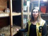'Uniek' konijntje Brownie uit Raalte plotseling verdwenen