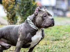 Baasje van bijtgrage honden uit Spijkenisse voor de rechter