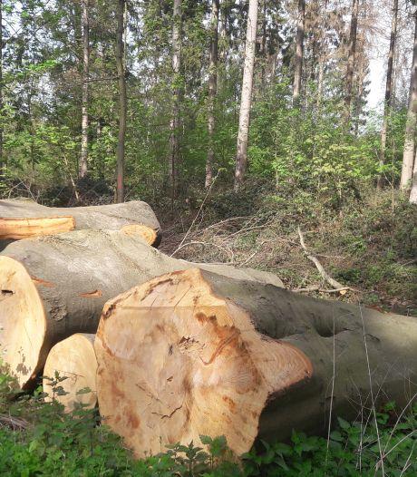 Bij gemeente Soest wordt steeds meer geklaagd, vooral over bomenkap en bouwactiviteiten