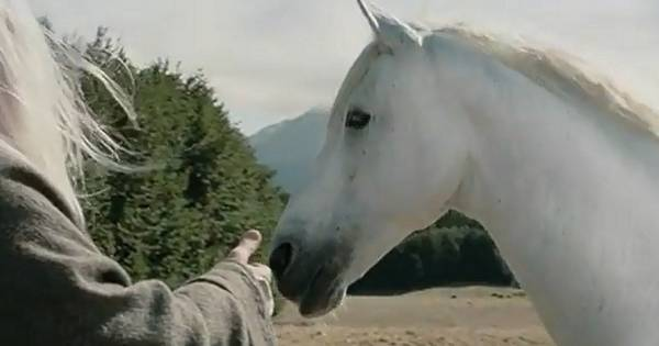 Citaten Uit Lord Of The Rings : Paard van gandalf uit lord of the rings is overleden