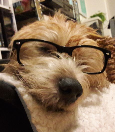 Workshop hond portretteren bij Toonbeeld, met foto eigen hond in de hand