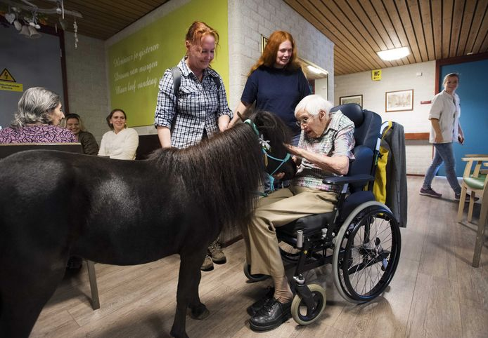 Een paardje komt aan bij woonzorg- en revalidatiecentrum PW Janssen. De sessies met het therapiepaardje laat dementerende ouderen in contact komen met de buitenwereld.