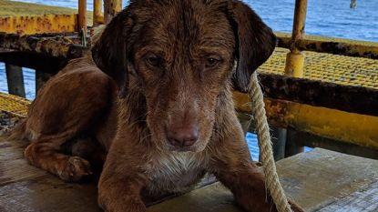 Hond zwemt ruim 200 kilometer in zee voor hij wordt gered