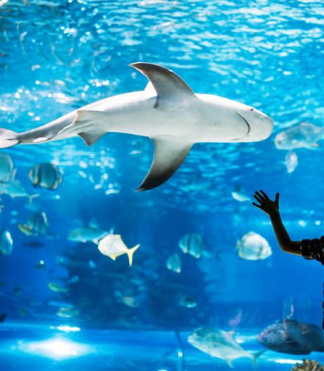 In deze baan werk je met kreeften, haaien en reptielen op Schiphol