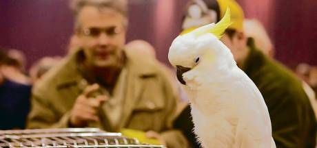 Zwolse vogelmarkt overleeft doorstart: 'Echt supergoed'