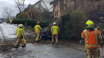 Bomen vallen op geparkeerde wagens tijdens stormweer