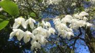 Arboretum Kalmthout nu al op weg om bezoekersrecord te breken