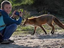 Deze vos kwam zó dichtbij dat natuurfotograaf Thijs (10) uit Deventer helemaal vergat te klikken