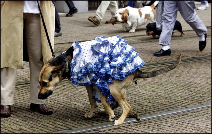 Hondenpoep hond honden