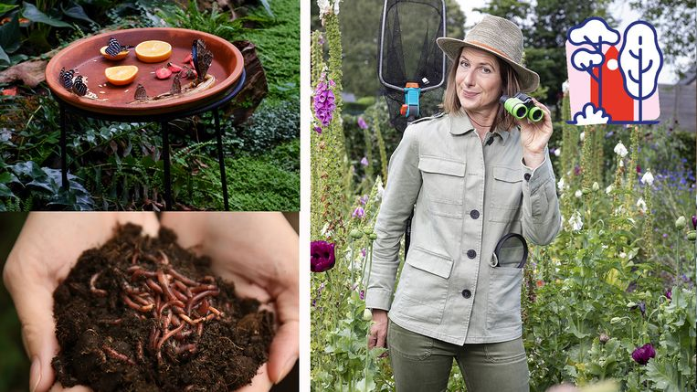 Wat zie je het liefst: vlinders of wormen?