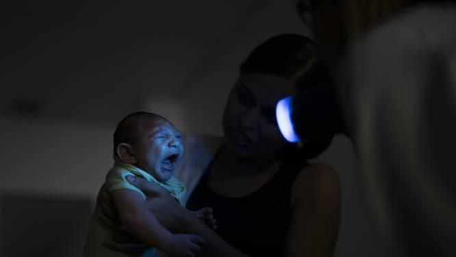 """""""Zika-vaccin is tegen het eind van dit jaar klaar"""""""