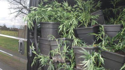 Cannabisplantage in huurwoning: twintiger komt er vanaf met straf met uitstel