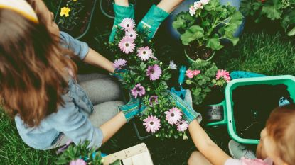 Geen groene vingers? Met deze potten en planten zit je goed!