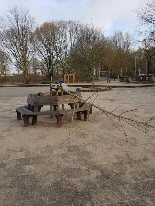 Anne Frankboom vernield op schoolplein in Doesburg