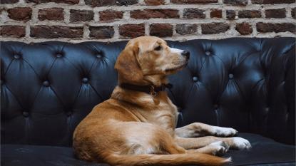 Knuffeltijd! In het eerste hondencafé van Europa