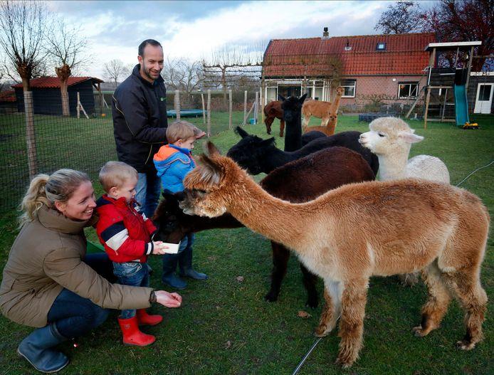 Familie Krijgsman en hun alpaca's.