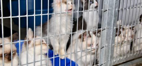 Dierenzorg Eemland houdt inzamelingsactie voor geredde honden en katten