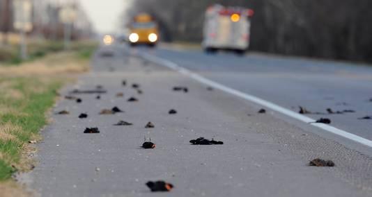 Des centaines d'oiseaux morts jonchent une route d'Arkansas.
