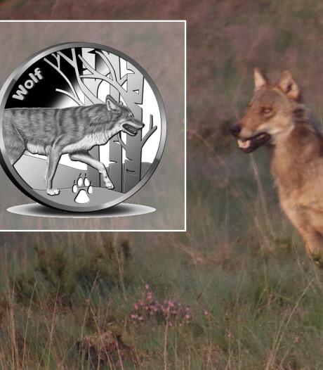 Wolf krijgt eigen munt: een van de 12 diersoorten die terug zijn in ons land