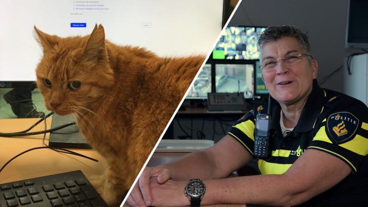 Politiekat Garfield woont al 13 jaar op bureau Delft
