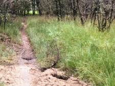 Dassen bouwen burcht midden op mountainbike-pad Loonse en Drunense Duinen, route voor veiligheid aangepast